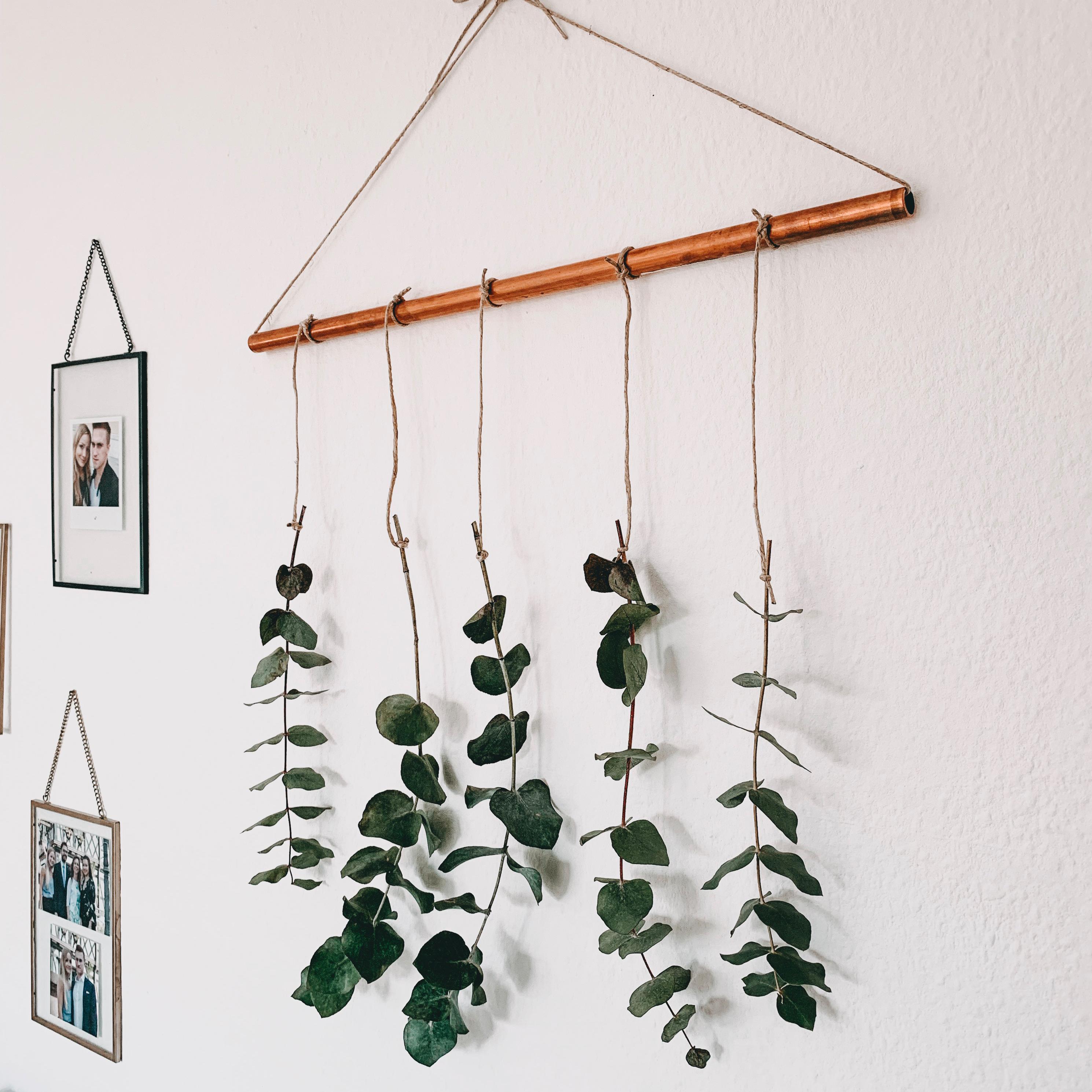 Eukalyptus Hanging